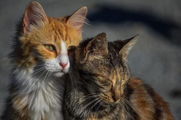 В правительстве России утвердили методические указания по обращению с безнадзорными животными Теперь бездомных животных, не проявляющих «немотивированную агрессию», предлагается выпускать на