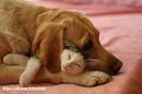 «Кошка полна тайны, как зверь; собака проста и наивна, как человек. ». — Карел Чапек
