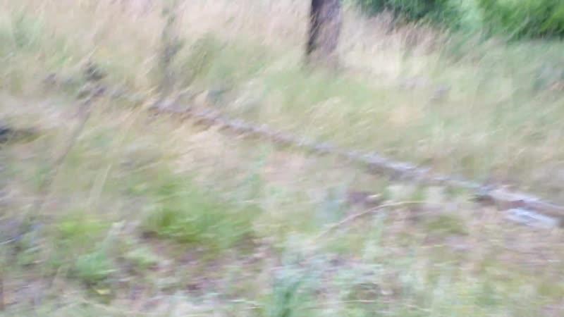Серые куропатки папа и мама вызывают огонь на себя