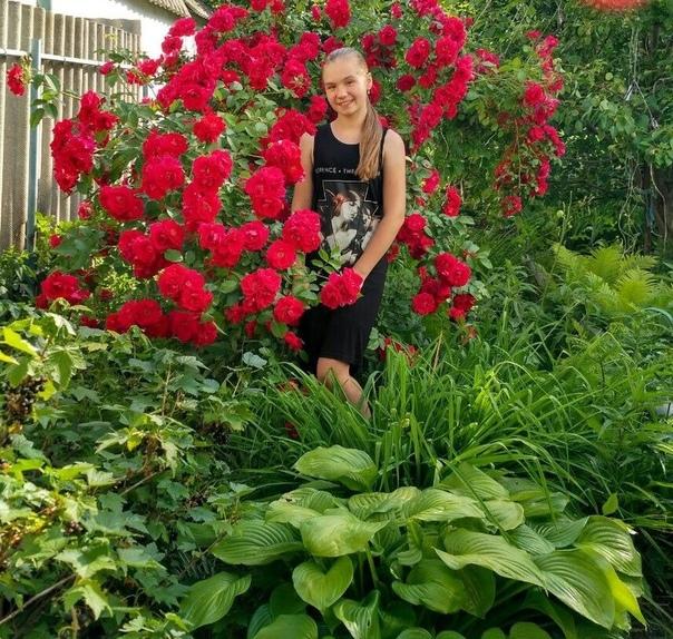 Обработка роз от болезней и вредителей в июле, что делать с розами в июле, уход, обработка, подкормка, черенкование, прививка
