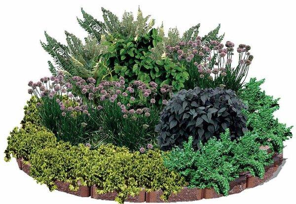 Как организовать красивый цветник из пряных растений для изысканных кулинарных шедевров. Пряная клумба в Вашем саду.
