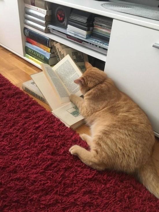 Барсик, ужинать!Сейчас,страничку дочитаю!!