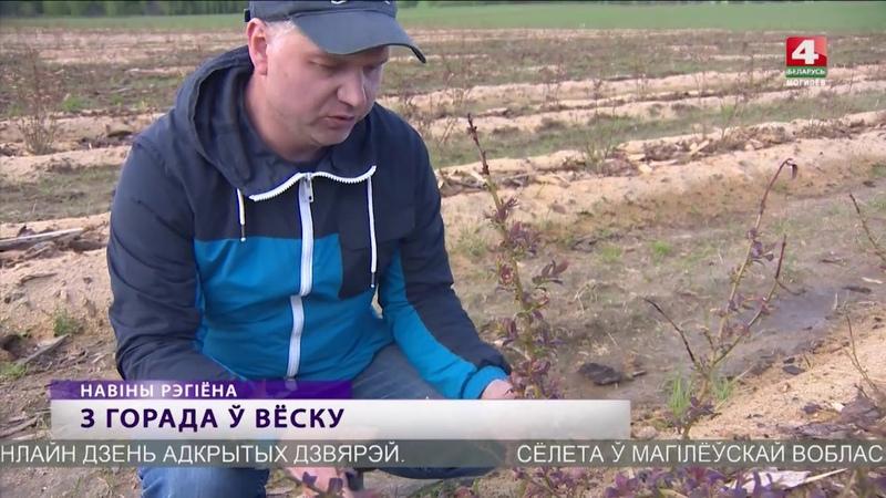 Плантации голубики и клубники создали в Белыничском районе частники [БЕЛАРУСЬ 4| Могилев]