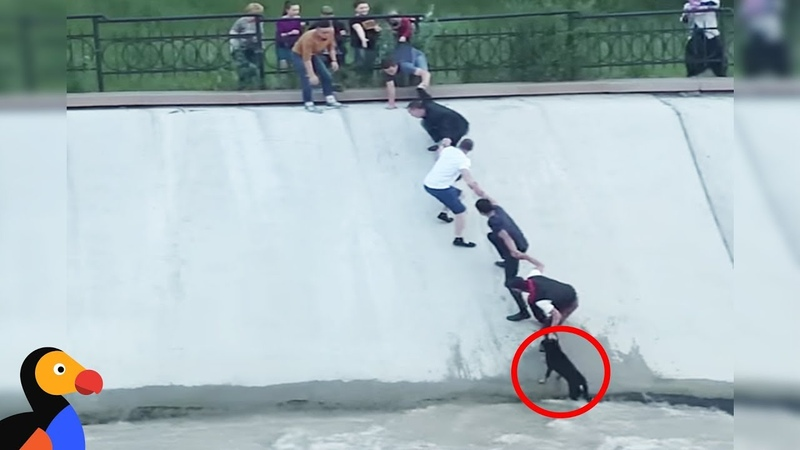 Most Intense Human Chain Ever Rescues Dog Stranded in Canal The Dodo