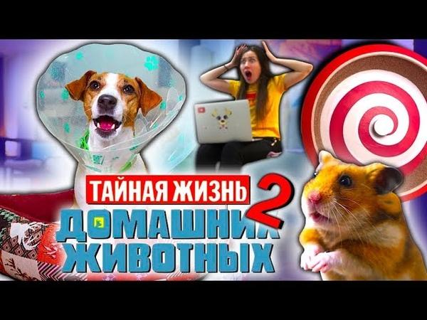 НОВАЯ ТАЙНАЯ ЖИЗНЬ Домашних Животных 2 Собака Джина и Хомяк Эдди Elli Di Pets