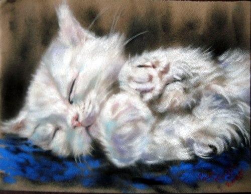 Живет у меня котишка. Обычный кот, здоровый, лохматый, но абсолютно слепой. Зовут Александр. С младенчества был мною подобран, вылечен, но, к сожалению, инфекция поразила его глаза, и они были удалены. Он у меня очень добрый и ранимый.