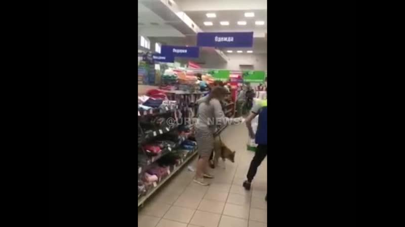 Собака с собачкой
