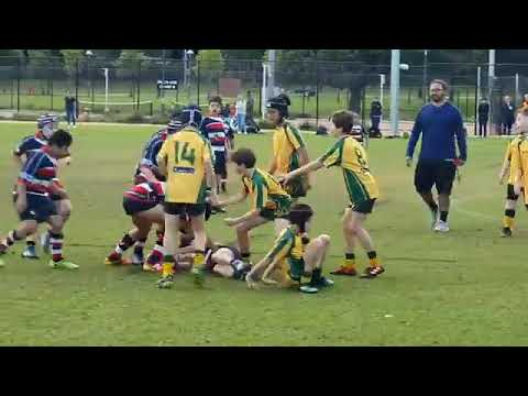 Southern Lions Reds vs Associates in the rugby for kids competition in perth