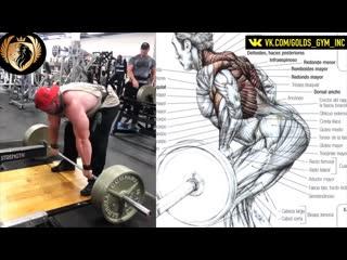 +10 упражнении для спины, больших и сильных грудных мышц