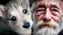 Волчонок смотрел ДЕДУШКЕ прямо в глаза. Этот ВЗГЛЯД растопил сердце старика и он забрал
