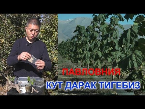 КУТ ДАРАК ТИГЕБИЗ АКЫЛ ЗАМАН NewTV