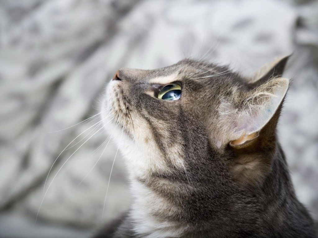 Котики-муркотики ツ