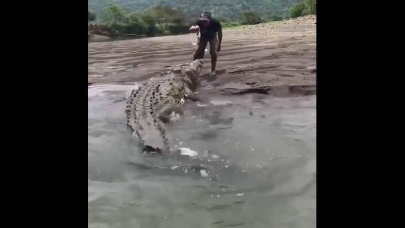 The awe size of this beast