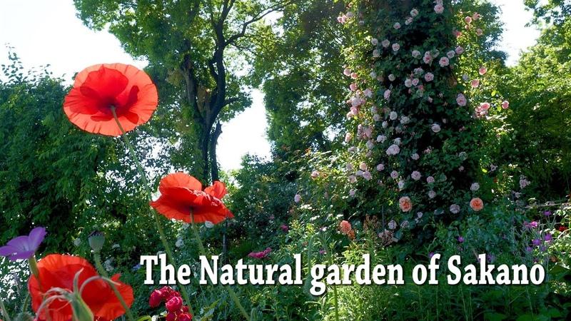 IBARAKI【Private Residence】The Natural Gardens of Sakano. Sakano Family Residence.4K