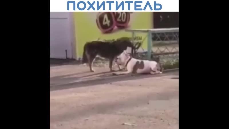 Так вот кто собак похищает