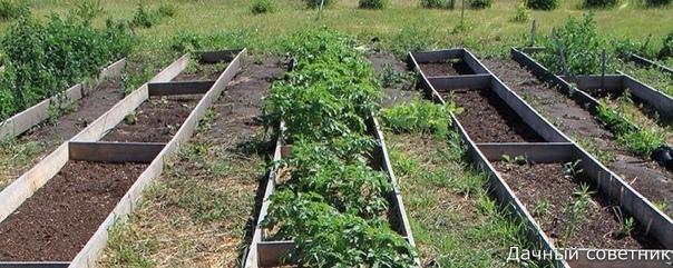 Увеличение урожая в 10 раз! (опыт природного земледелия)10 лет назад мы начали применять методы природного земледелия на своем участке. И в первый же сезон заметили их эффективность. Урожайность