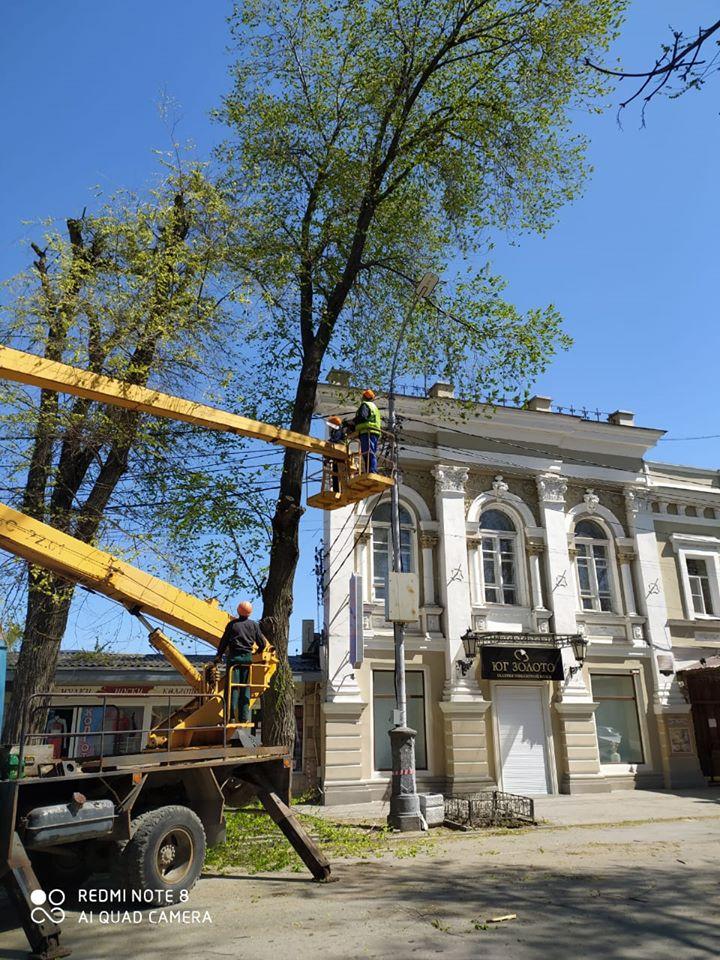 В Таганроге на улице Петровской выполняются мероприятия по реконструкции зеленых насаждений