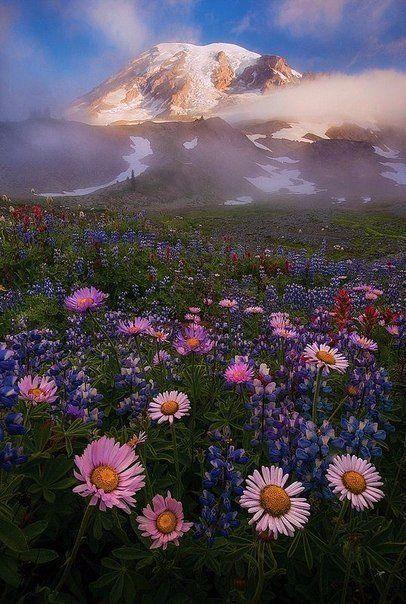 Прекрасная жизнь начинается с прекрасных мыслей. Доброе утро!
