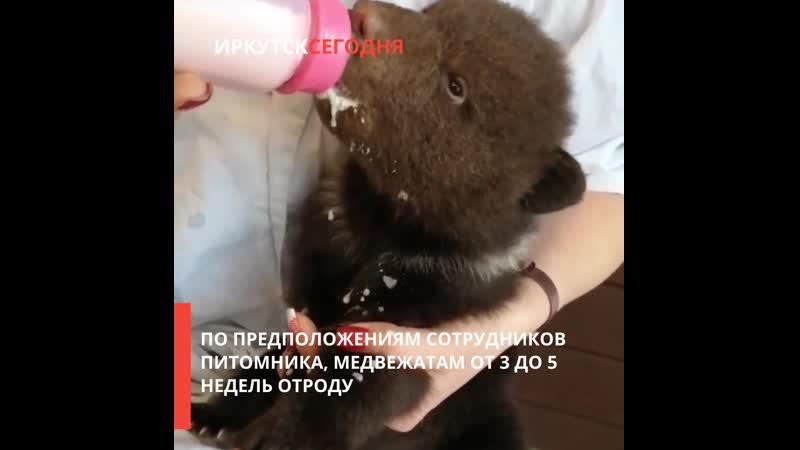 Медвежат оставили у питомника К 9 в Иркутске 26 февраля