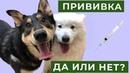 Прививка. Да или нет Ваши собаки боятся вакцинироваться
