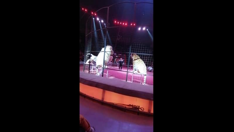 Тигры Львы и Якутский цирк Казань 24 02 2020