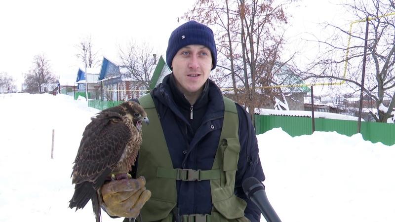 Житель Мамадышского района учит диких птиц охотиться