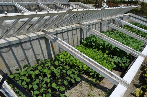 Как и из чего соорудить простой парник на даче Парник простое сооружение, предназначенное для выращивания рассады, сделать которое по силам каждому. Из чего его можно соорудить, как правильно