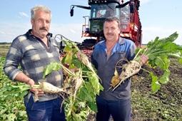 Сахарные заводы переработали 35 тысяч тонн сахара из свеклы нового урожая