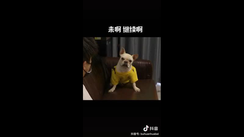 Не твоё собачье дело