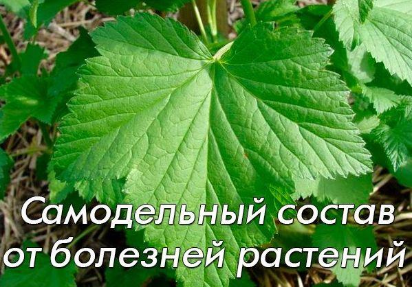 Самодельный состав от болезней растений