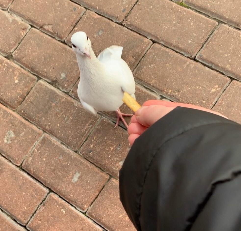 Около Макдоналдса на Профессиональной замечены дрессированные птички