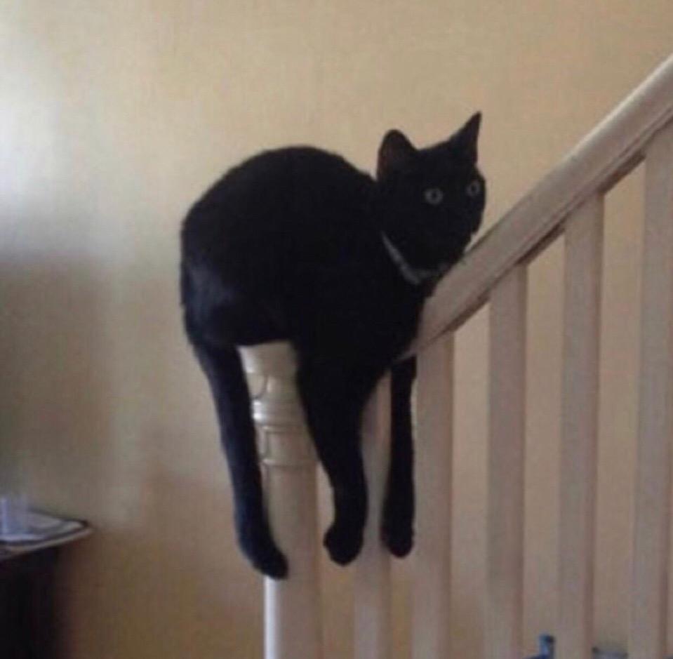 У вас тут это... кот утекает