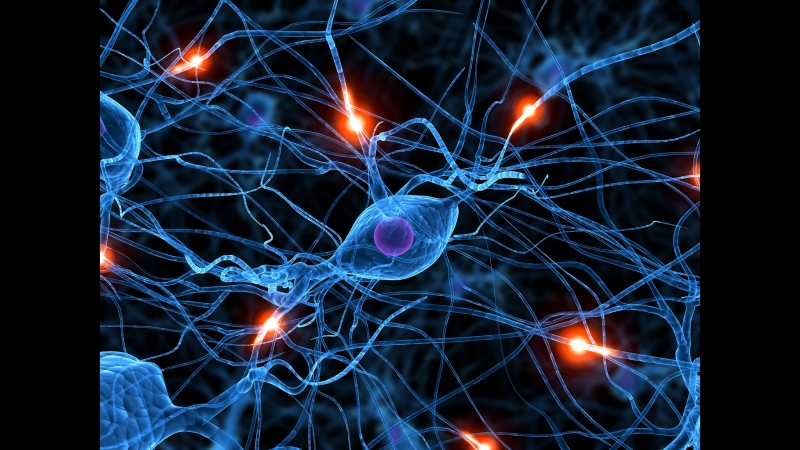 BBC Тело человека 5 Мозг человека The Human Body Кристофер Спенсер Christopher Spencer