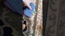 Удаления пятен с ковров без химии