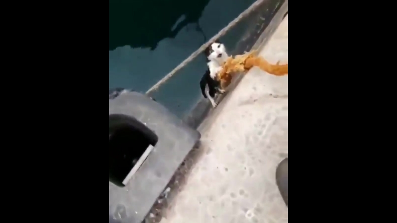 Cat Saved from the Canals