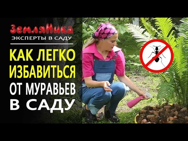 Как легко избавится от муравьев Безопасно для детей и животных Быстро и красиво