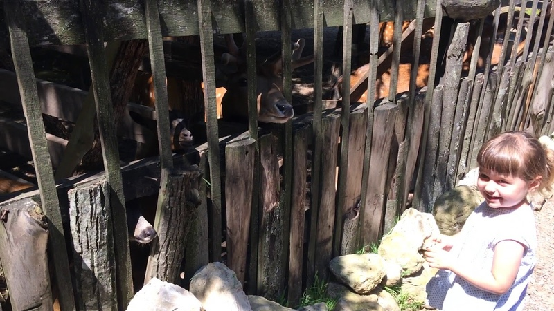 Контактный зоопарк Горица возле Бялы, Болгария / Zoo Gorica, Byala, Bulgaria