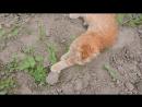 Деревенское. Коты на прогулке