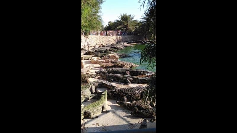 остров джерба крокодиловая ферма