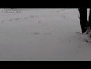 Белочка ныряет в сугроб