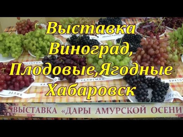 Выставка ДАРЫ АМУРСКОЙ ОСЕНИ 2018 . Виноград. Плодовые . Ягодные. Хабаровск.