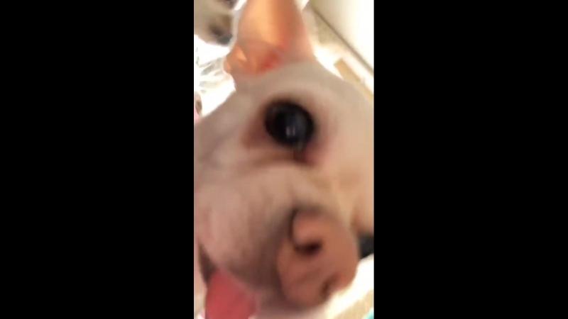 Любимая собака Илюши Белова Энджи 🐶