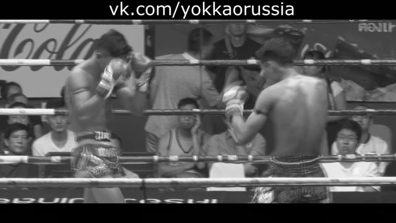 YOKKAO_VINES KNOCKOUT | vk.comyokkaorussia