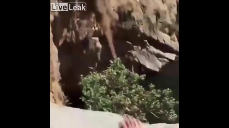 Срывается с обрыва и падает на скалы.