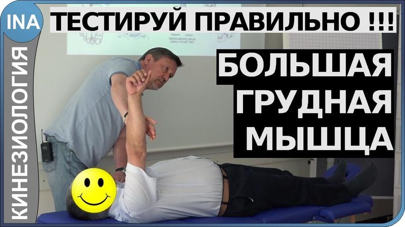 Мышечное тестирование. Большая грудная мышца. Кинезиология. Обучение в Германии » Freewka.com - Смотреть онлайн в хорощем качестве