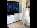 Пёсик смотрит м/ф «Зверополис»