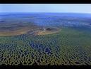 Самое большое болото в мире Васюганское болото