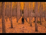 Songs for Autumn- IndieFolkOther Playlist, Fall 2018