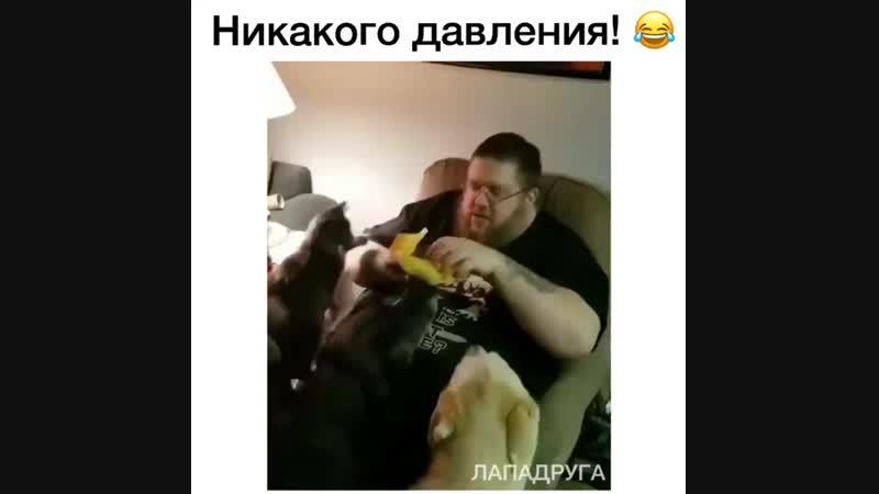 Кошка укусила бургер, собаки пошли кусать кошку... 😆
