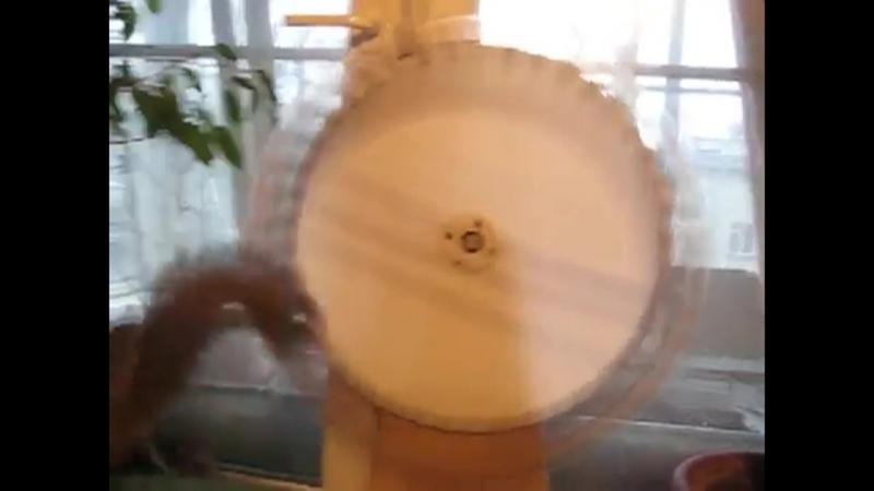 Белка в колесе